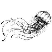 Jelly Fish 1  Thumbnail