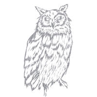 Night Owl  Thumbnail